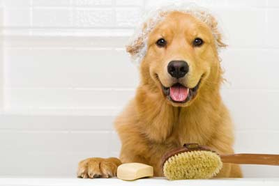 cute washed dog