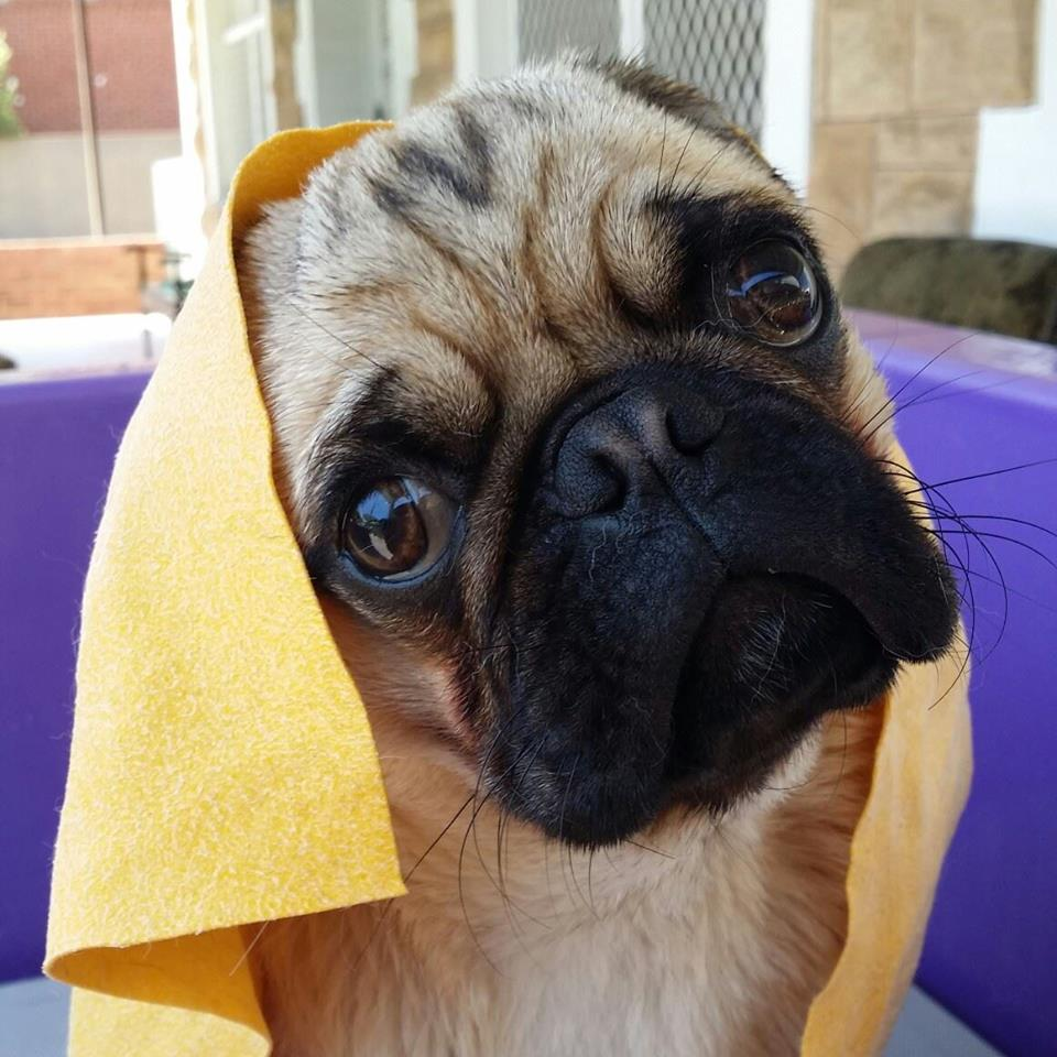 Mobile dog wash morisset express dog wash as a qualified vet nurse with over 32 years of experience in the industry and owning 6 dogs herself annette from express dog washing grooming morisset solutioingenieria Images