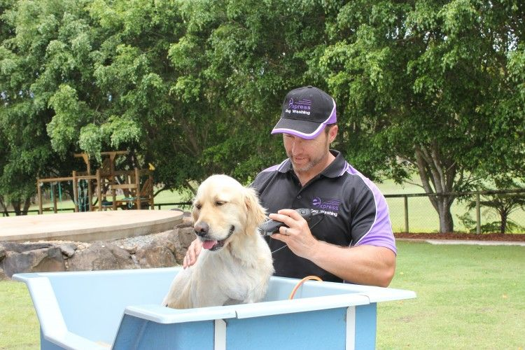 Mobile Dog Washing