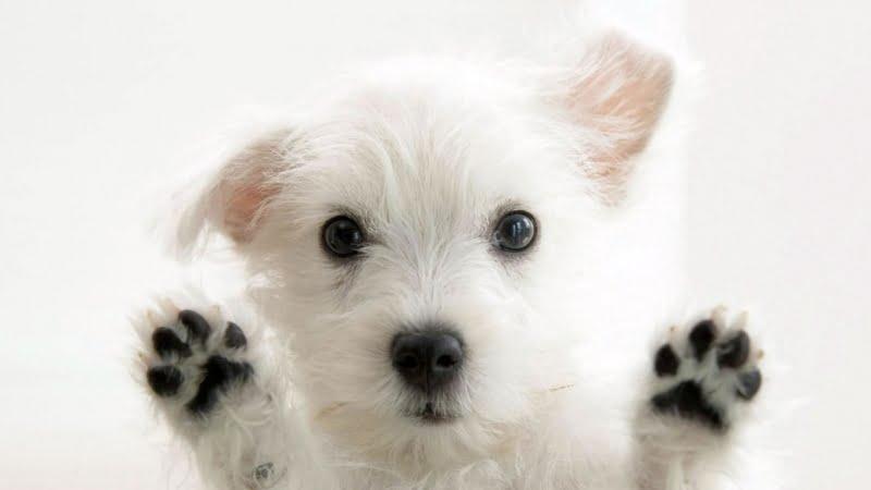cute clean dog