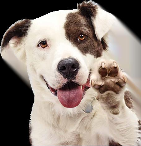 express dog