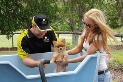 pulse dog washing franchisee cleaning a small dog